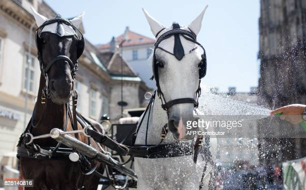 Carriage horses get a shower to cool down at Stephansplatz on a hot summer day in Vienna on August 1 2017 Austria's ZAMG meteorological service...