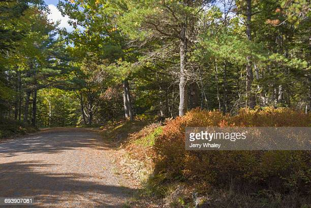 Carriage Road, Acadia NP, Mount Desert Island