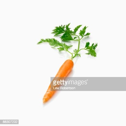 Carrot with Greens Attached on White