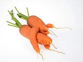 two strange carrots on white background