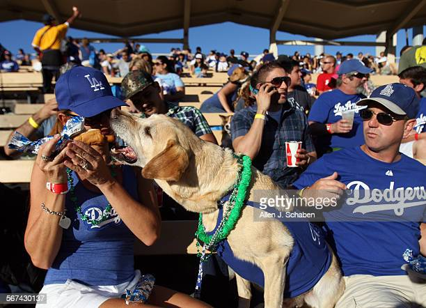 'Carson' who won best dog trick during the 'pup rally' owned by Jan and Michael Harrington of Ventura eats a Dodger Dog in his stadium seat during...