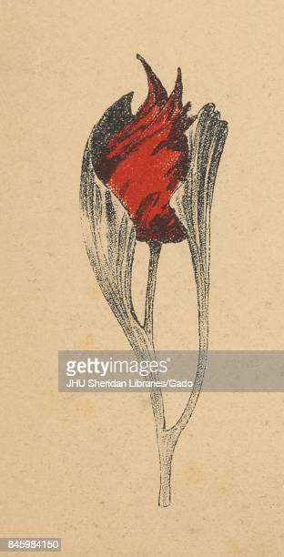 Cartoon of an unknown red flower that has not yet blossomed from the Russian satirical journal Gamayun 1906