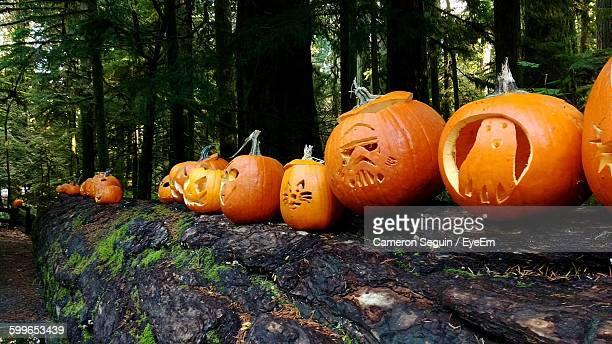 Carved Pumpkins On Fallen Tree In Forest During Halloween