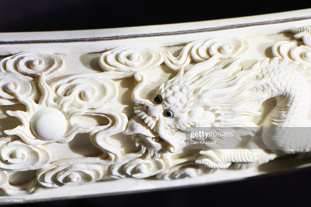A carving made from illegal ivory is displayed at an 'Endangered Species' exhibition at London Zoo on September 12, 2011 in London, England. The exhibition is organised by 'Operation Charm', a Metropolitan Police partnership aimed at tackling the illegal trade in endangered wildlife and runs for one month at London Zoo. Items include a 10 week old stuffed Tiger cub, the tooth of a sperm whale, Ivory carvings, and a stuffed Tiger.