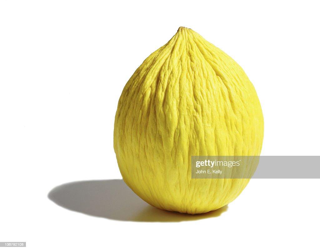 Casaba melon on white