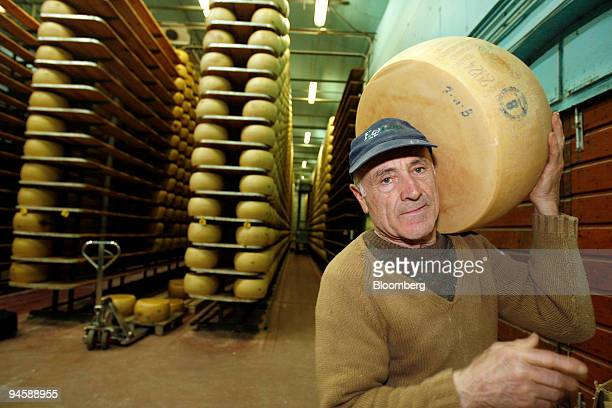 Casaro or cheesemaker Carlo Frandini carries a wheel of ParmigianoReggiano or parmesan cheese having completed its aging cycle to be sliced and...