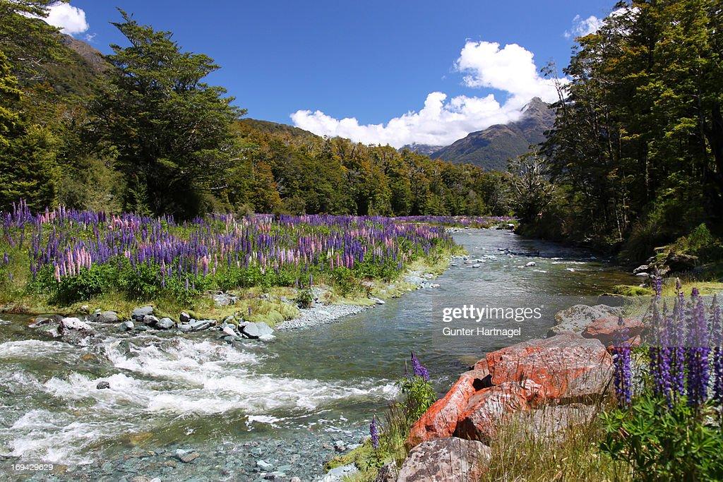Cascade Creek, colourful landscape