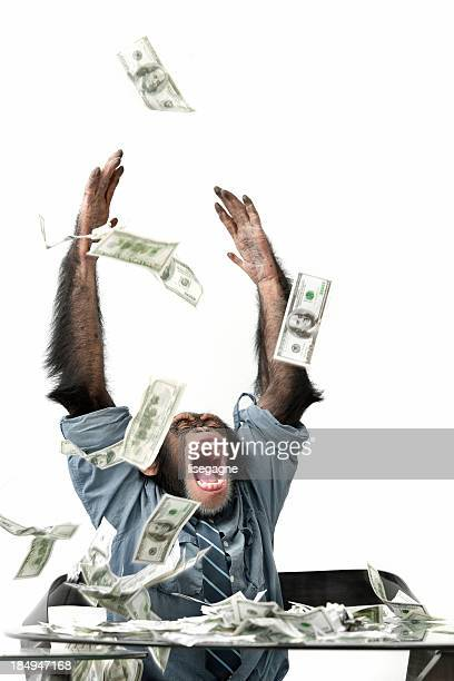 現金に落ちる雄チンパンジー