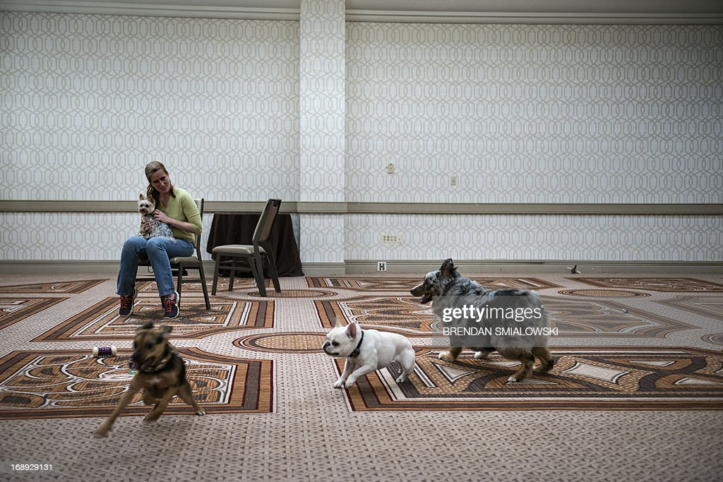 Cassandra Johnson sits with dogs while petsitting for bloggers in a ballroom at the Sheraton Premiere hotel during the 5th annual BlogPaws 2013...