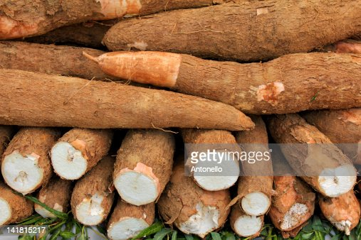 Cassava Stock Photos and Pictures