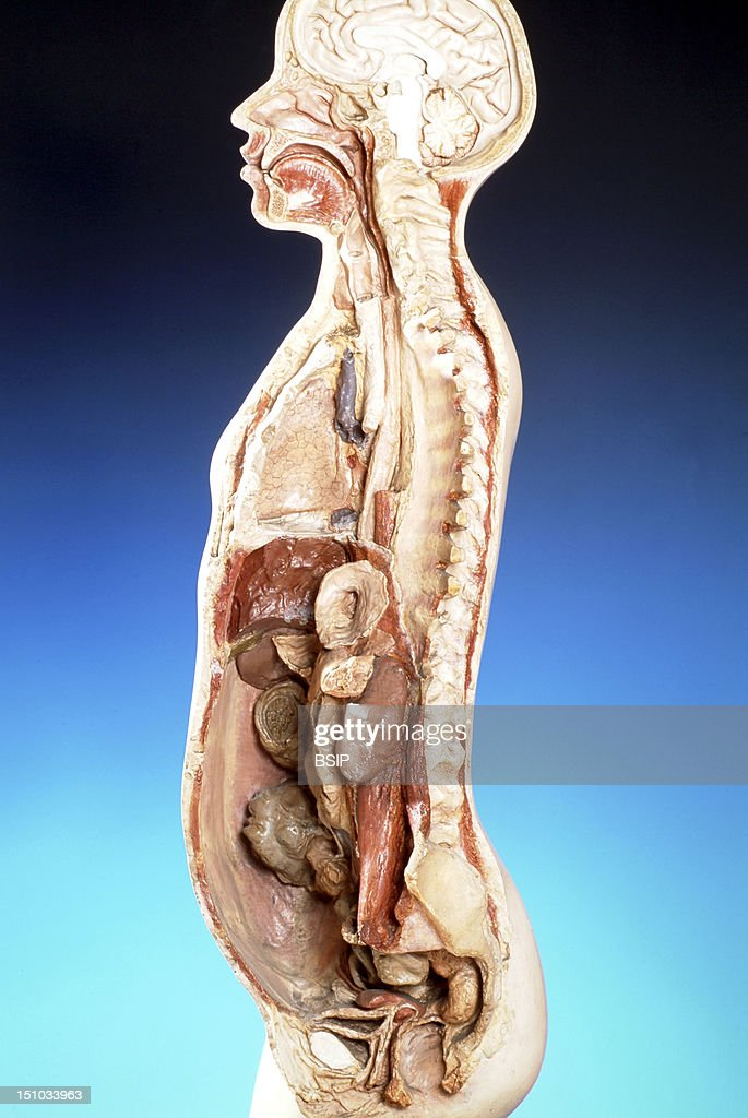 Human Anatomy Organs Left Side 53637 Loadtve