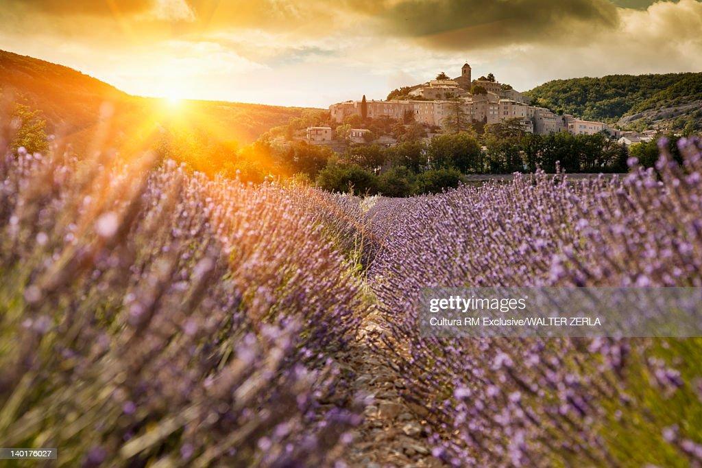 Castle overlooking field of flowers