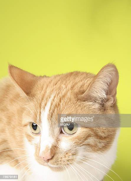 Cat against coloured background, close-up
