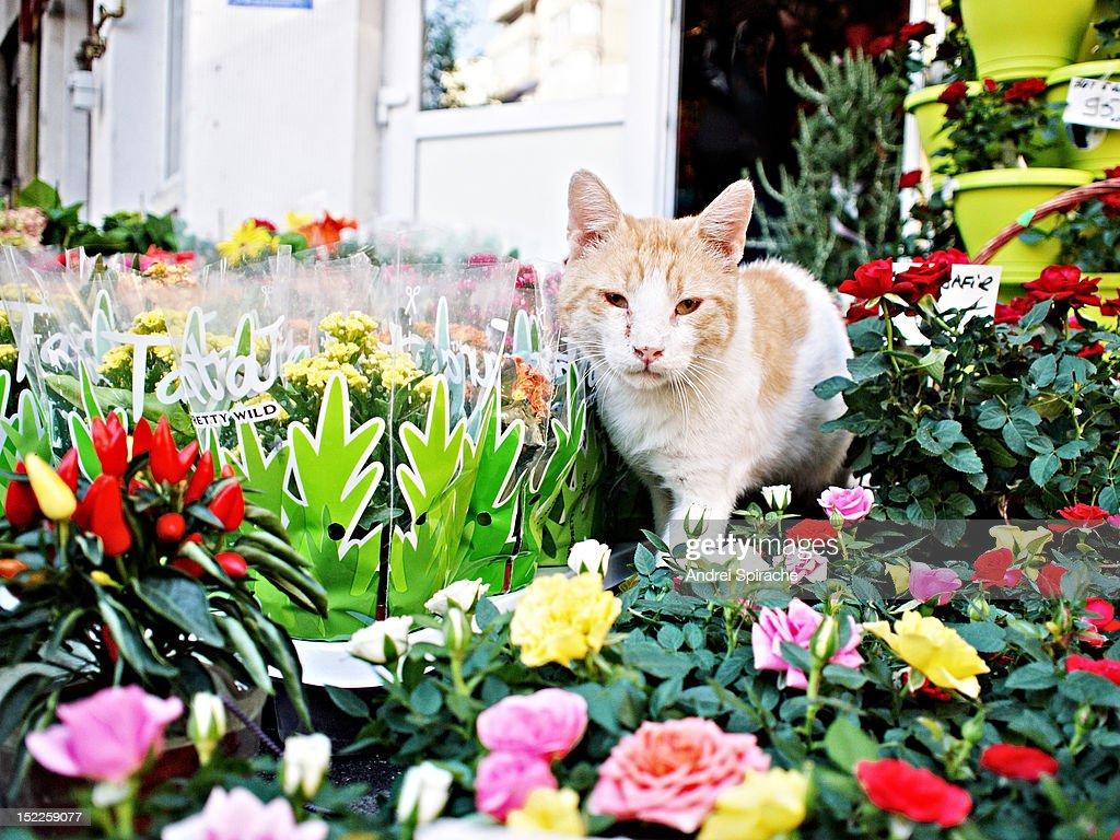 Cat amongst flowers : Stock Photo