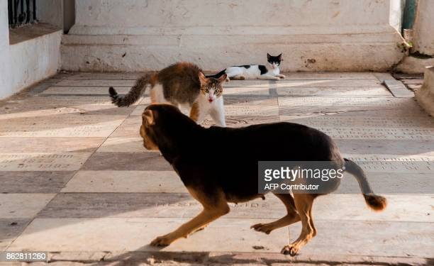 A cat and a dog face off at the cemetery in Santa Cruz de Mompox Bolivar department Colombia on September 23 2017 In the town of Mompox which...