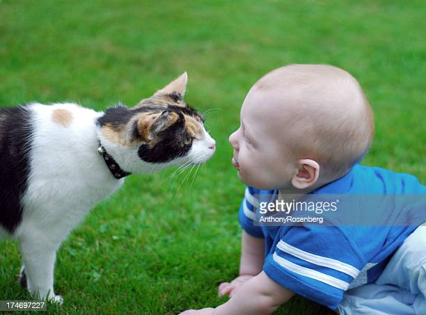 Cat and baby kiss