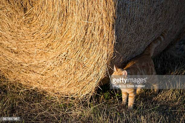 Cat and bale