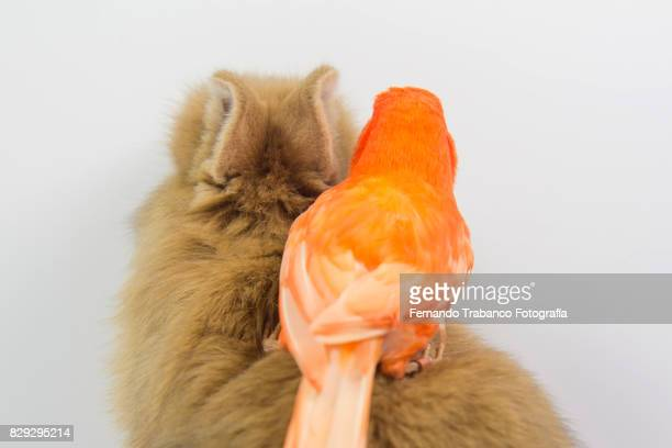 Cat and bird, animal friendship