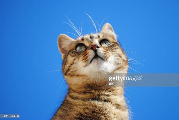 Cat and blue background