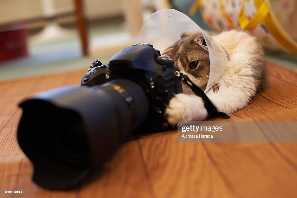 Cat and camera : Stock Photo