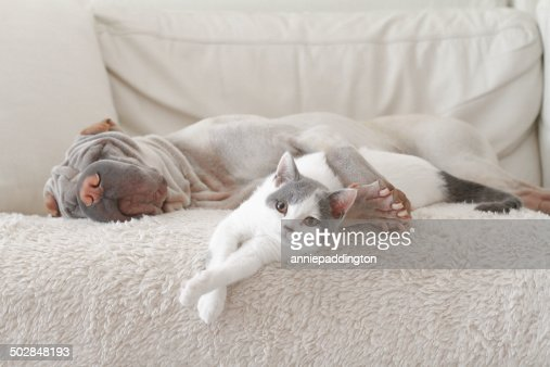 Cat and dog hugging on sofa