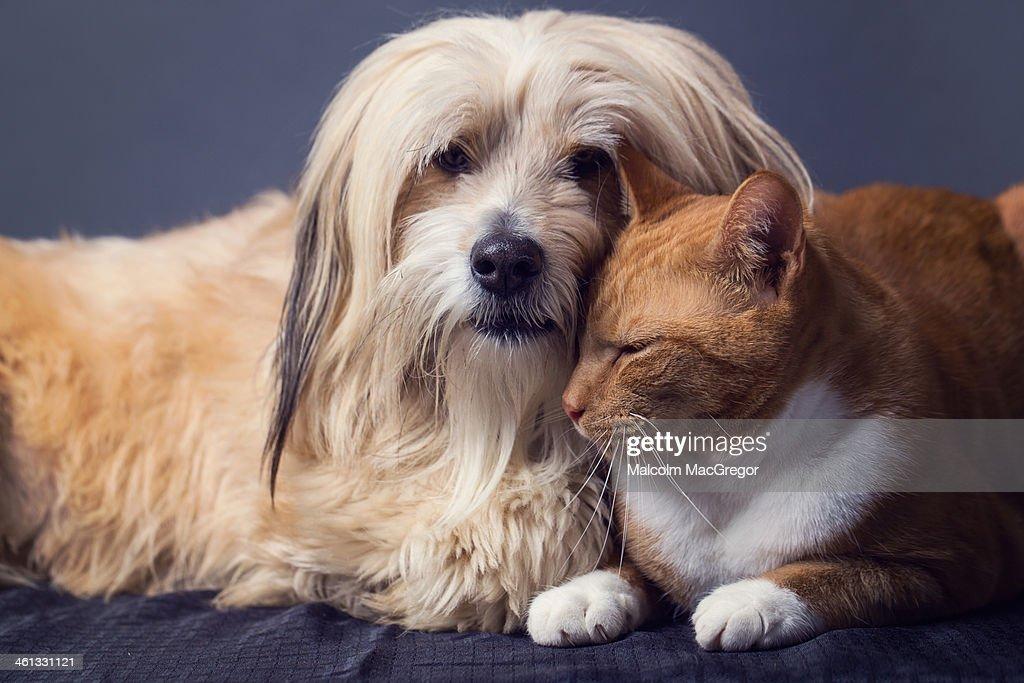 Cat and Dog in Studio : Foto de stock