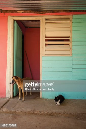 Cat and dog on curb outside colorful building : Stock Photo