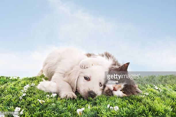 Gato y perro lado a lado sobre hierba y cielo azul