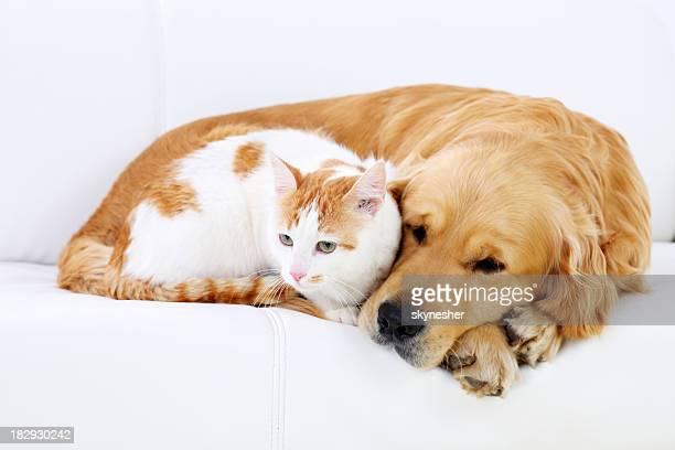Katze und Hund ruhen zusammen.