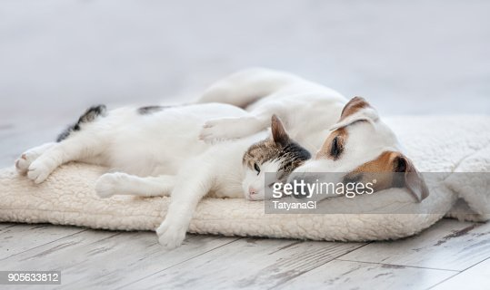 Cat and dog sleeping : Foto de stock