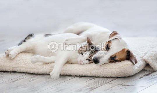 Cat and dog sleeping : Stock Photo