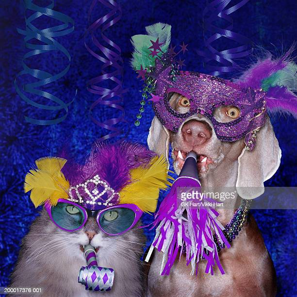 Cat and dog wearing party paraphernalia, portrait
