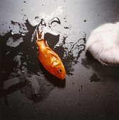 Cat and Dying Goldfish