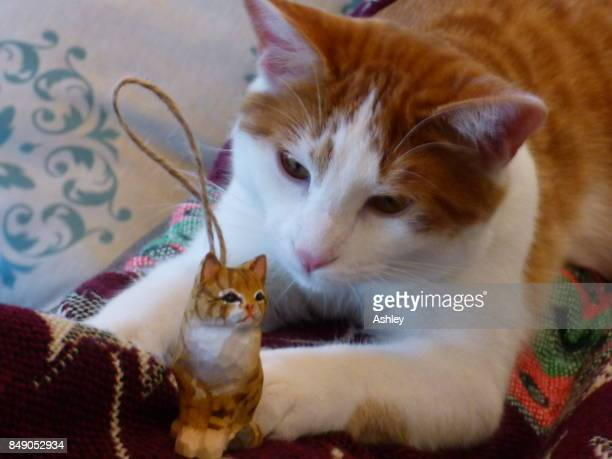 Cat and his Christmas Ornament