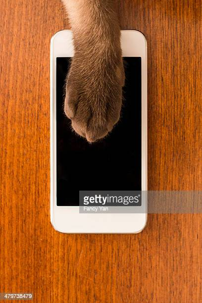 cat and mobile phone