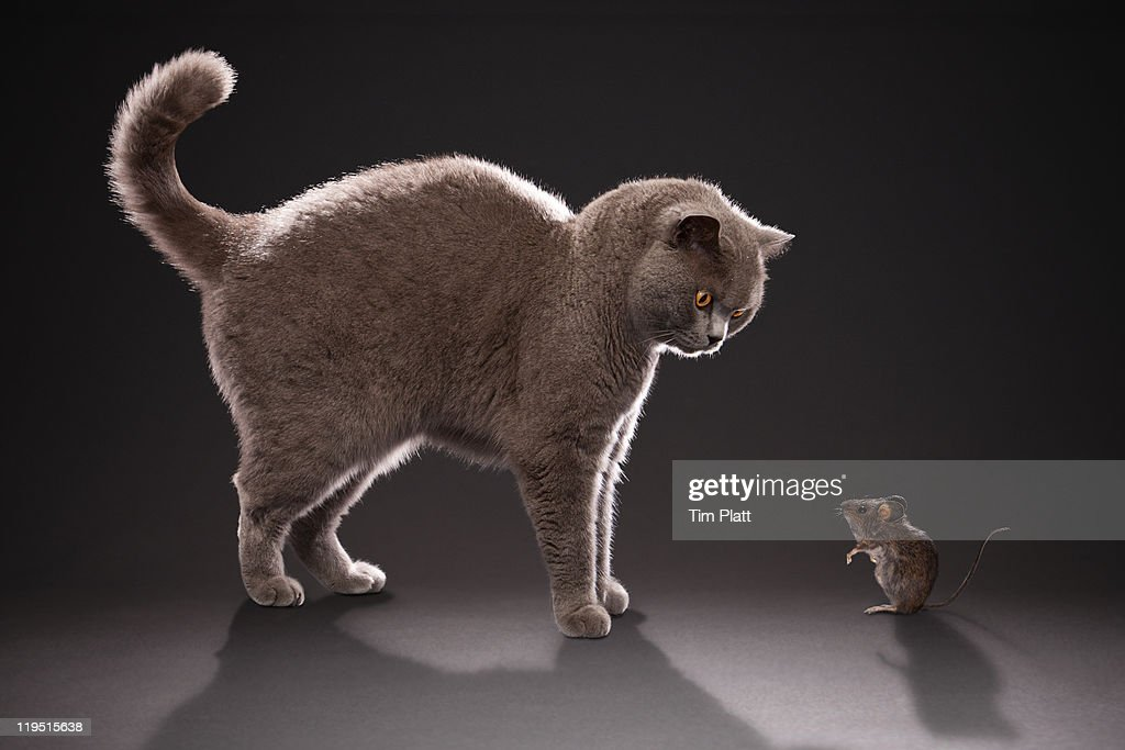 Cat and mouse : Stock Photo