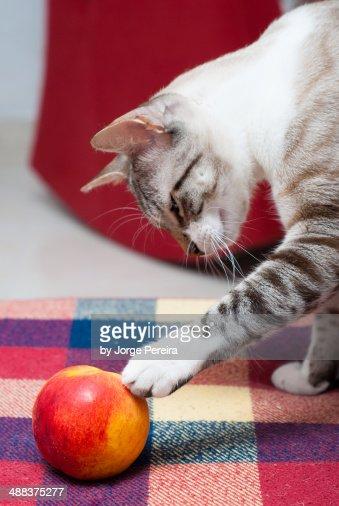 Fruit In Pussy 45