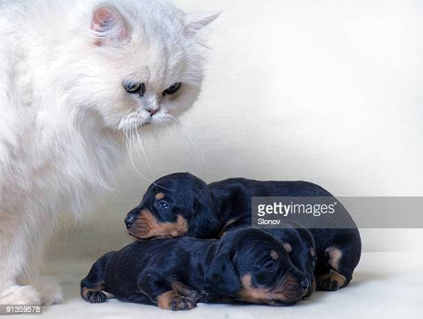 Cat and puppies
