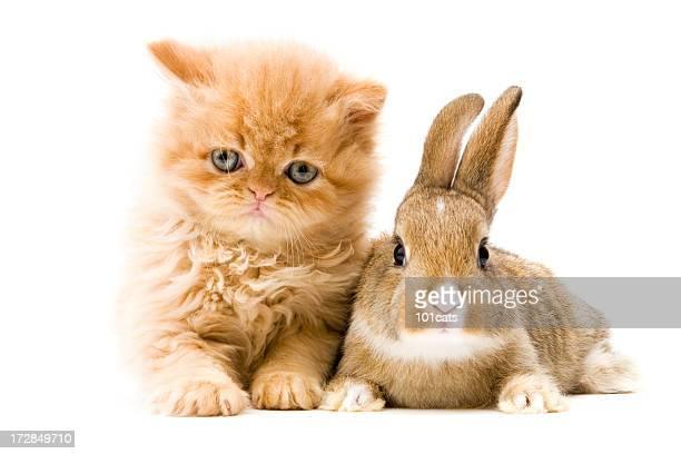 cat and rabbit