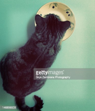 Cat and saucer