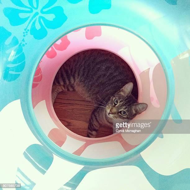 Cat and Swim Tubes