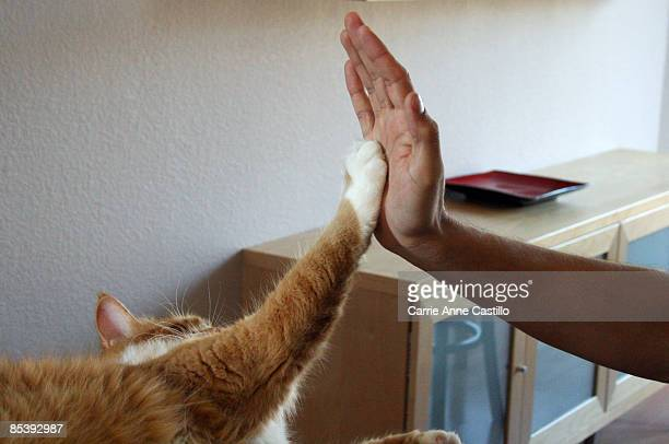 Cat appears to give person a high five