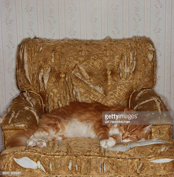 Cat Asleep on Torn Armchair
