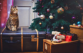 cat at home sitting on a suitcase Beautiful Christmas background with a new year daccor, presents and old boxes of a wooden background. Christmas card with a Christmas.