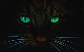 Cat at night with glowing green eyes looking towards camera