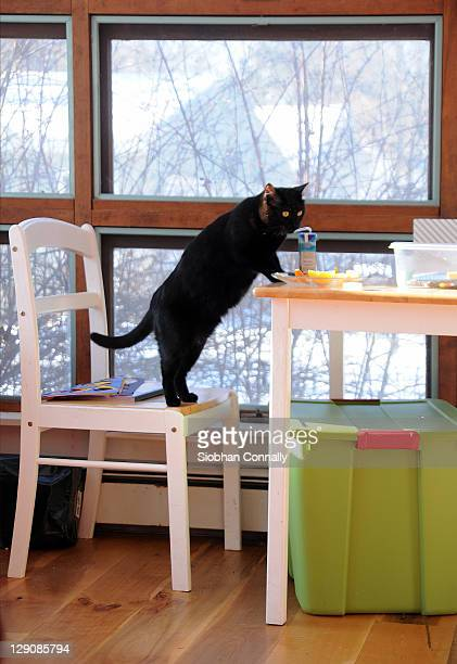 Cat at table appearing to drink from juice box