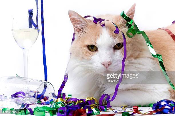 Cat at the end of a Party