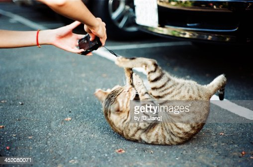 Cat attack : Stock Photo