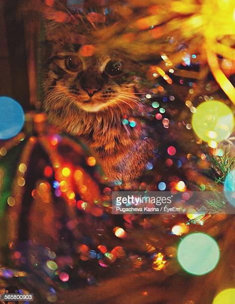 Cat Behind Illuminated Christmas Tree At Home