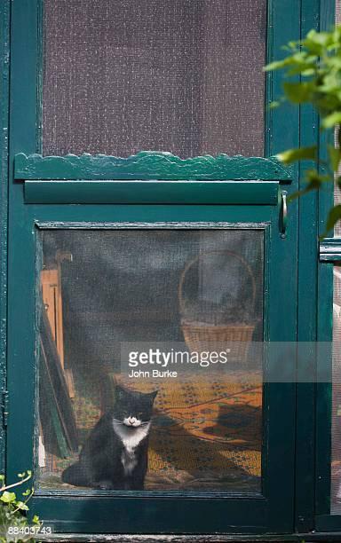 Cat behind screen door